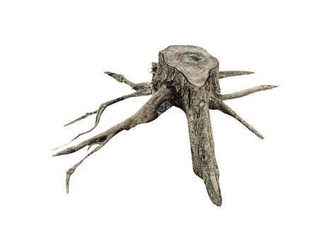 Stump tree on white background Stock Photo