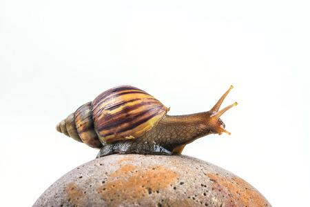 snails on white background