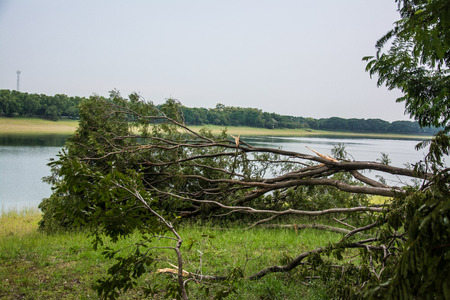 The tree was destroyed by the storms intensity . Banco de Imagens
