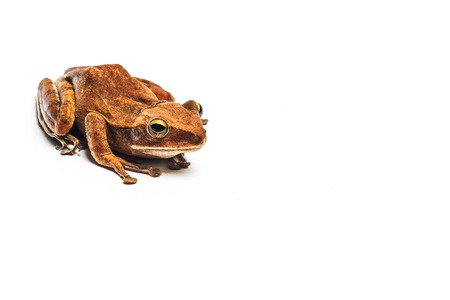 frog isolated on white background Stock Photo