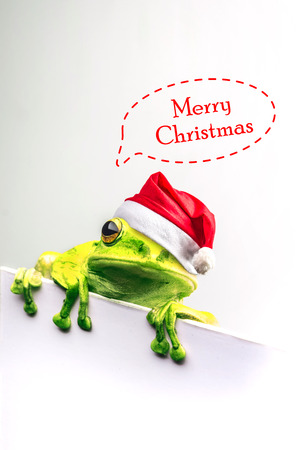 frog with Christmas hat isolated on white background .