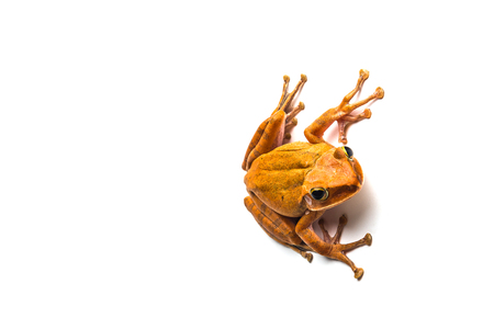 frog isolated on white background .