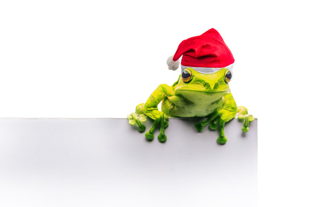 frog with Christmas hat isolated on white background Stock Photo