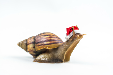 Christmas hat with snails on white background . Stock Photo