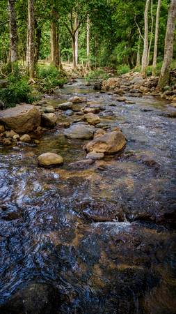 Streams in the forest . Stock Photo