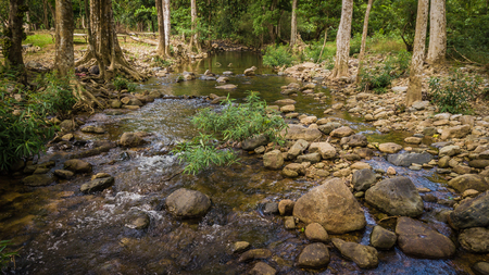 Streams in the forest . 写真素材