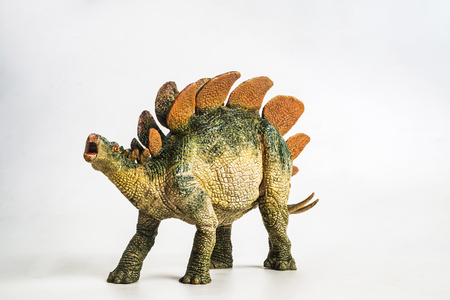dinosaur , Stegosaurus  on white background .