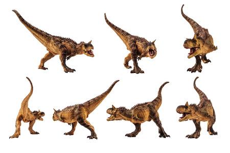 Carnotaurus Dinosaur on white background .