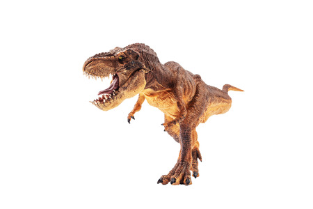 Tyrannosaurus rex  , Dinosaur on white background .