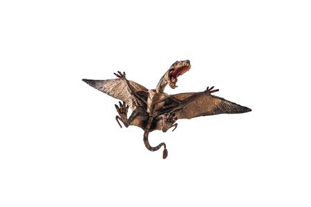 Dimorphodon Dinosaur on white background  . Stock fotó