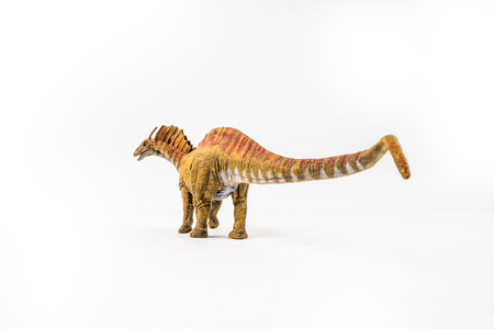 Amargasaurus ,dinosaur on white background .