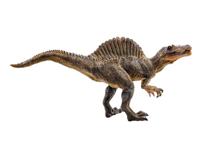Spinosaurus ,dinosaur on white background .
