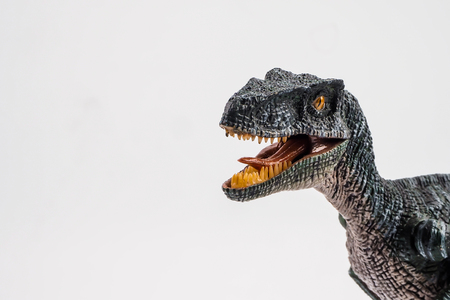 Velociraptor  ,dinosaur on white background  . 版權商用圖片