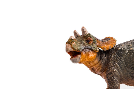 Baby Triceratops   ,dinosaur on white background . Banco de Imagens