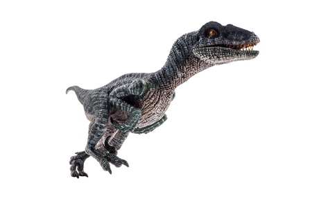 Velociraptor  ,dinosaur on white background  . Banco de Imagens