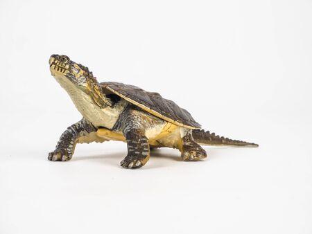 turtle on white background . Stock Photo