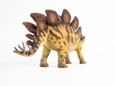Stegosaurus Dinosaur on white background.