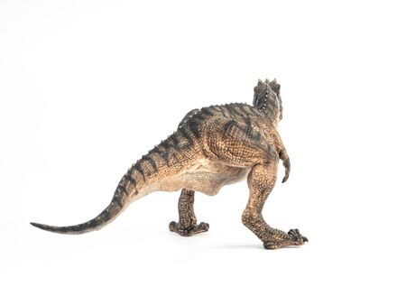 Gorgosaurus Dinosaur on white background  .