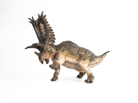 Pentaceratops Dinosaur on white background  .