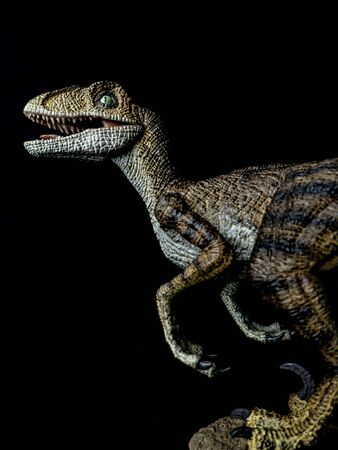 Velociraptor Dinosaur on black background .