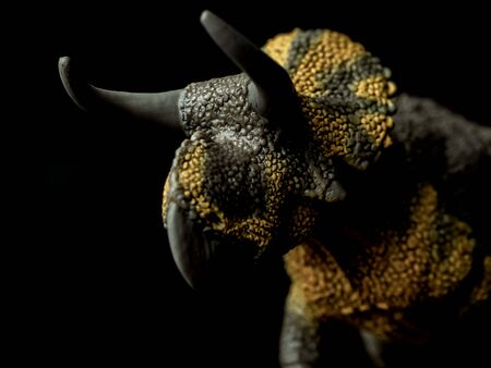 Nasutoceratops Dinosaur on black background .