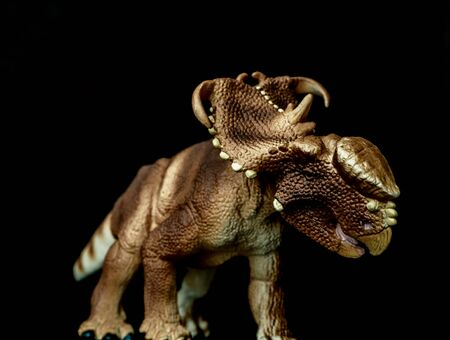 Pachyrhinosaurus Dinosaur on black background .