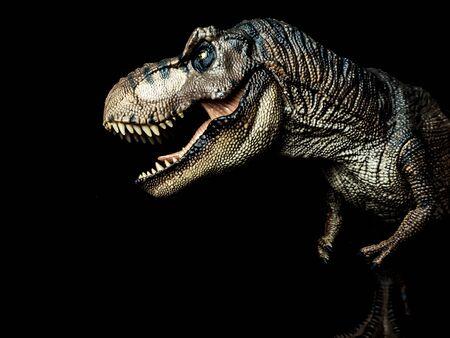 Dinosaurio Tyrannosaurus T-rex sobre fondo negro. Foto de archivo