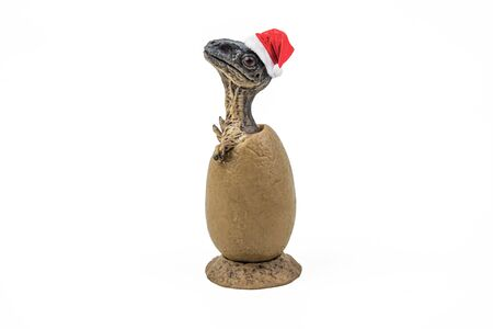 Velociraptor in the egg ,with Christmas hat dinosaur on white background   .