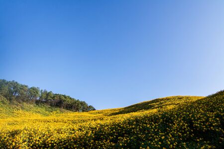 Landscape nature flower Tung Bua Tong Mexican sunflower field ,Mae Hong Son,Thailand Banco de Imagens