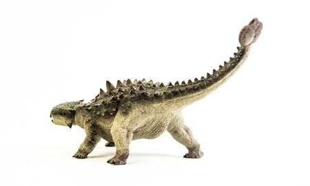 Ankylosaurus   ,dinosaur on white background .