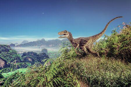 Velociraptor Dinosaur on the mountain .
