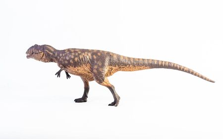 Giganotosaurus ,dinosaur on white background .