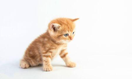 Cat baby tabby Kitten Cute Beautifu on white background 版權商用圖片 - 150076223