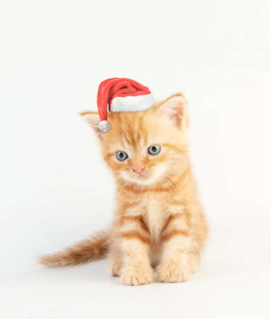 Cat baby tabby Kitten Cute Beautifu With christmas hat on white background