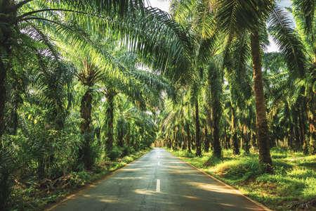Palm garden , plantation  way in plantation Palm tree in tropical garden 版權商用圖片