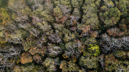 An aerial view of forest .