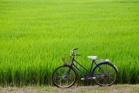 old bicycle with paddy field background Zdjęcie Seryjne - 10262229