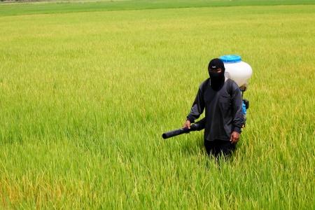 Farmer spreading  fertilizer in rice field Zdjęcie Seryjne