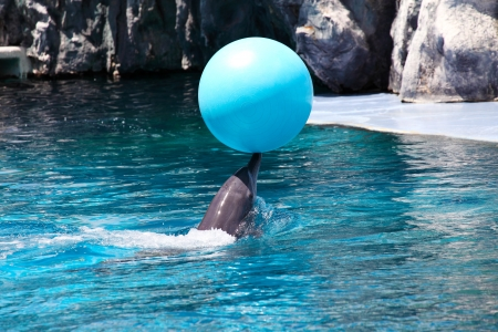 Performing Dolphin with Blue Ball