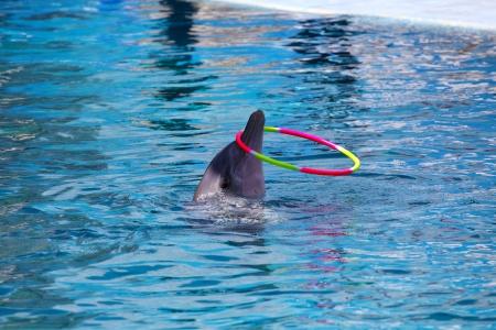 Dancing Dolphin with Hoop