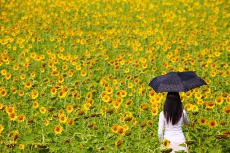 Young Woman with Umbrella in Sunflower Field Zdjęcie Seryjne