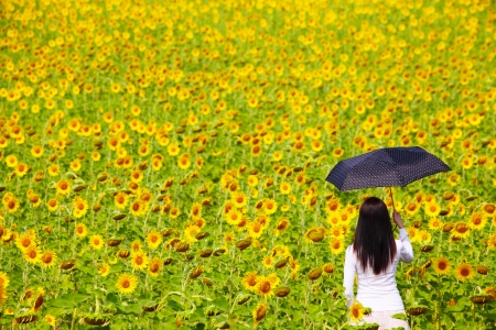 Young Woman with Umbrella in Sunflower Field photo