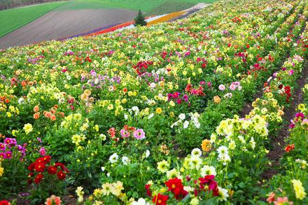 Flower Garden in Hokkaido, Japan Zdjęcie Seryjne - 34486639