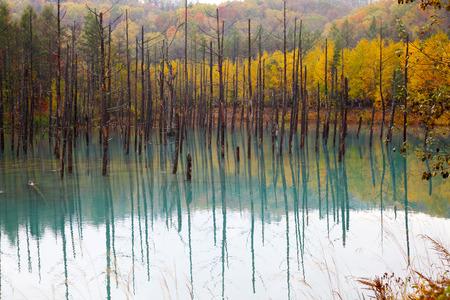 A Beautiful Blue Pond in Hokkaido, Japan Zdjęcie Seryjne