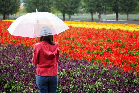 Woman with Umbrella at Tomita Lavender Farm, Hokkaido Zdjęcie Seryjne - 34486878