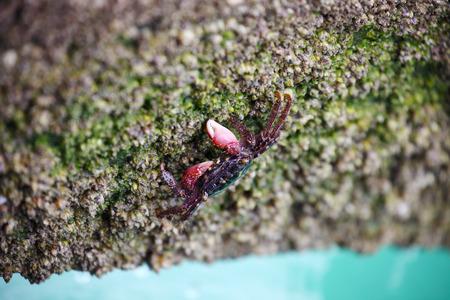 Crab Finding Food on Rocky Beach Zdjęcie Seryjne