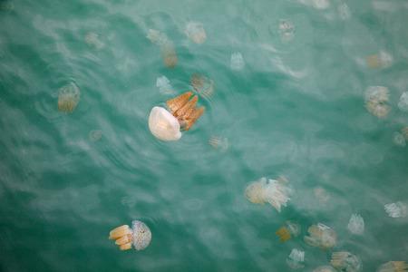 Beautiful Jellyfish Floating in the Sea Zdjęcie Seryjne - 35814311