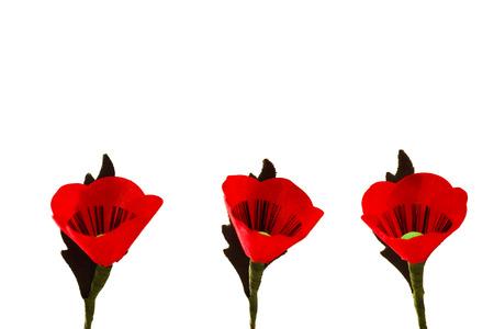 Red Poppy Flowers, Isolation on White Background