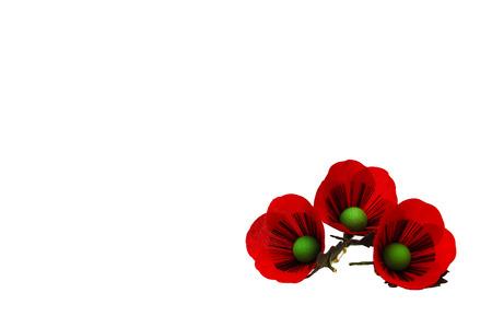 Red Poppy Flowers, isolation on white background Zdjęcie Seryjne