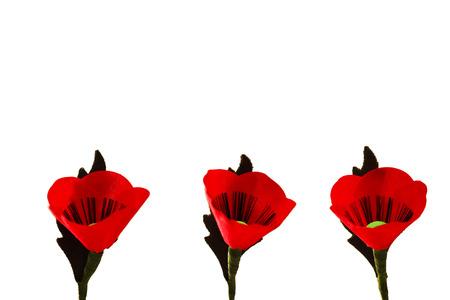 Red Poppy Flowers Zdjęcie Seryjne